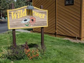 Wild Flower 48