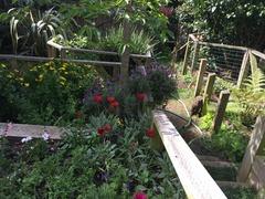 Rose Green Cottage