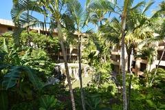 Paki Maui 316