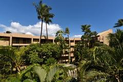 Paki Maui 415